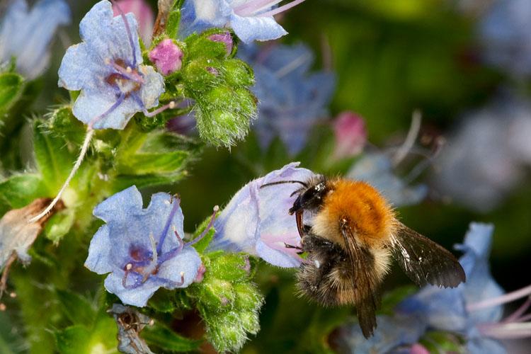Last Nectar?