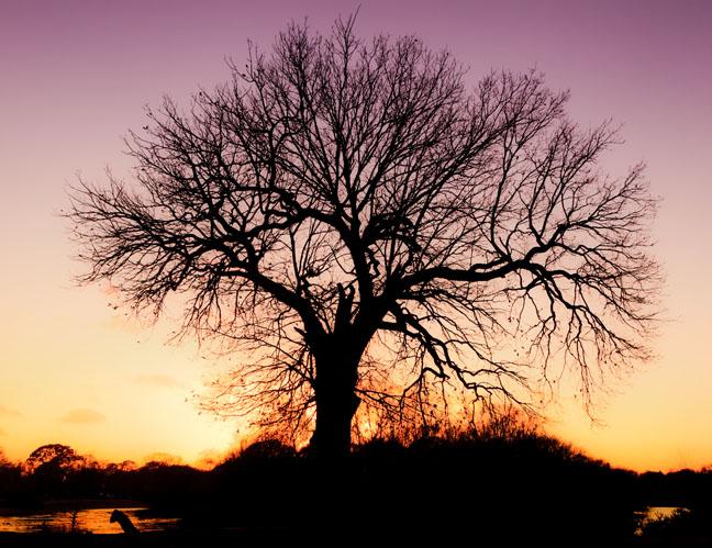 LDNP Oak as Rorschach?